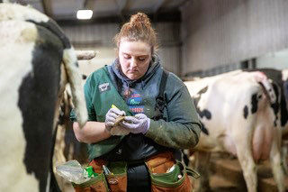 Megan Lauber with cattle