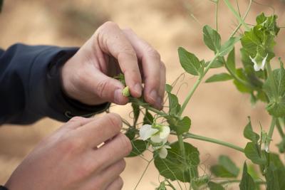 smart seed agri-tech