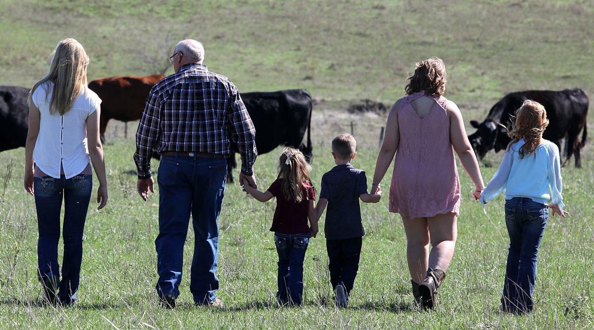 Walking in cattle