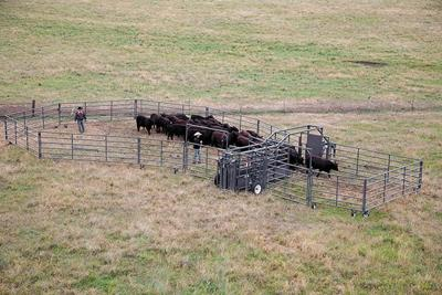 Businesses of Agriculture Ranch Rawhide Portable Corrals 3-8-19
