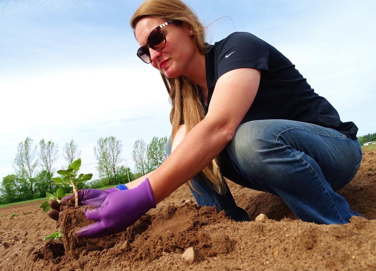 Lynn Leahy with potato plant