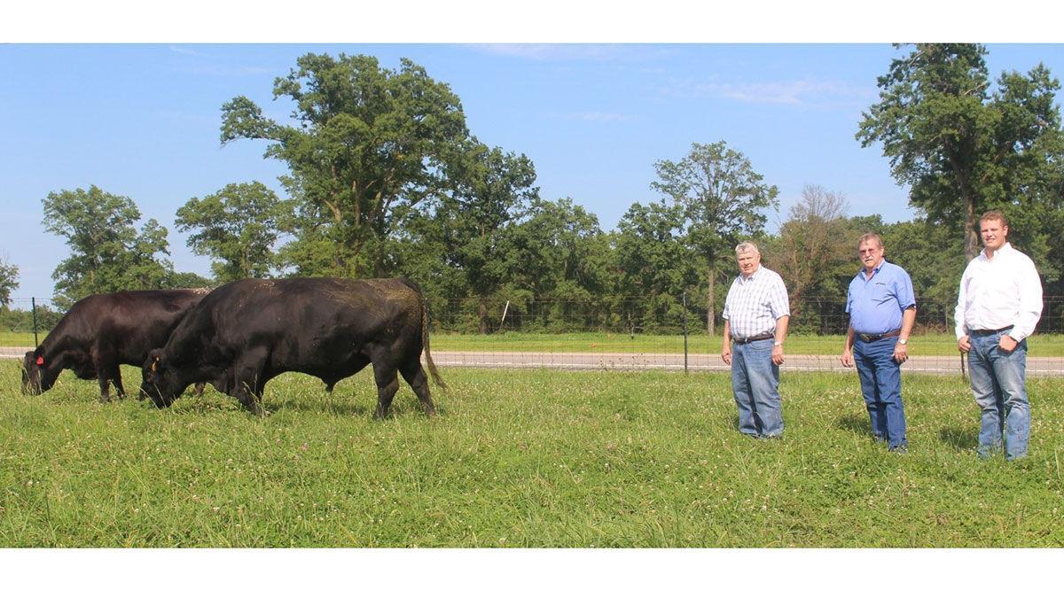 Sydenstricker Genetics bull Exceed