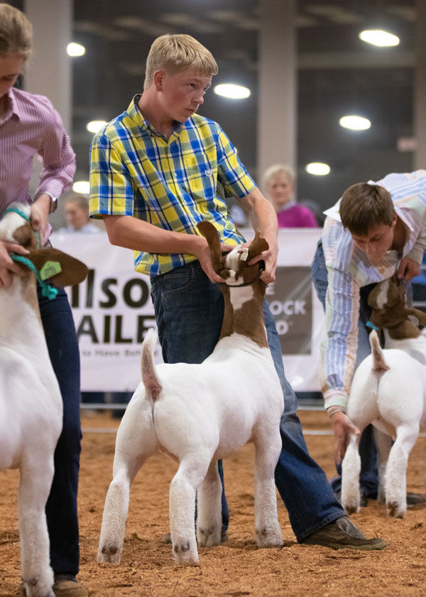 FFA goats 2