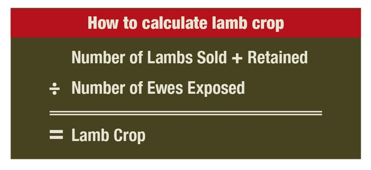 How to calculate lamb crop