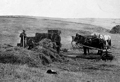 Taubenheims putting up hay