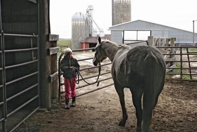 Hicks horse