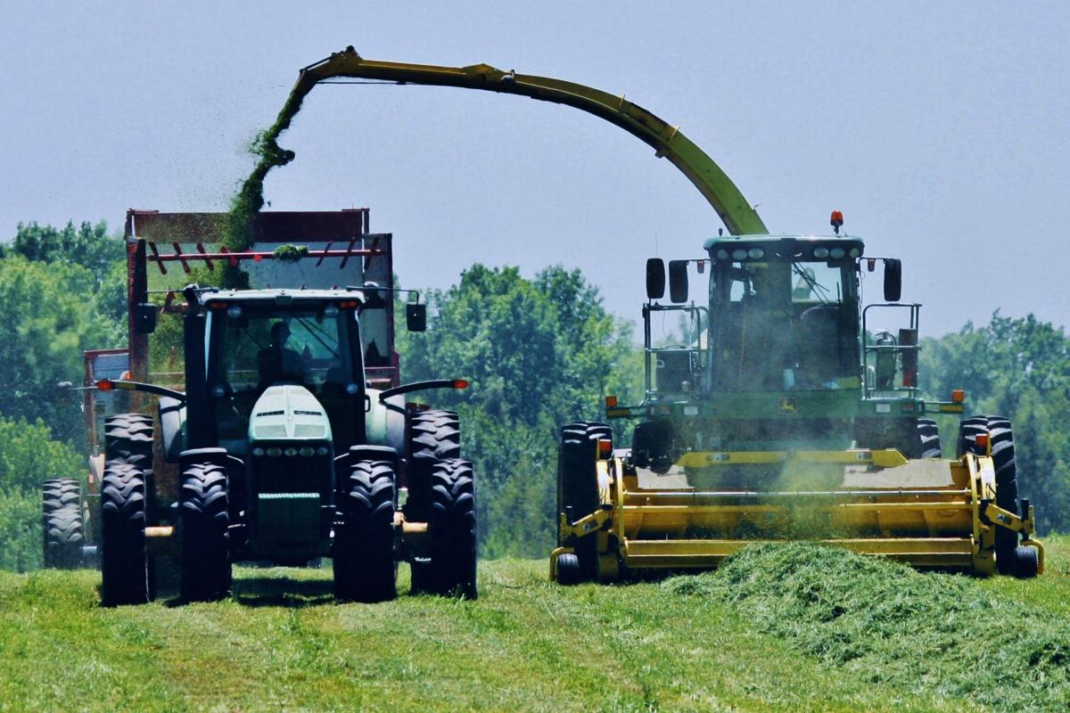 Tractor, combine, wagons harvest forage  in field