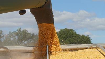 Corn flowing into wagon