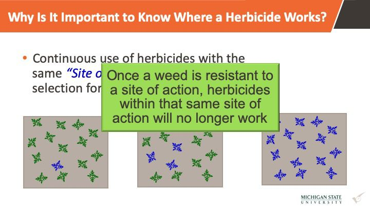 Michigan State University weed resistance site of action graphic