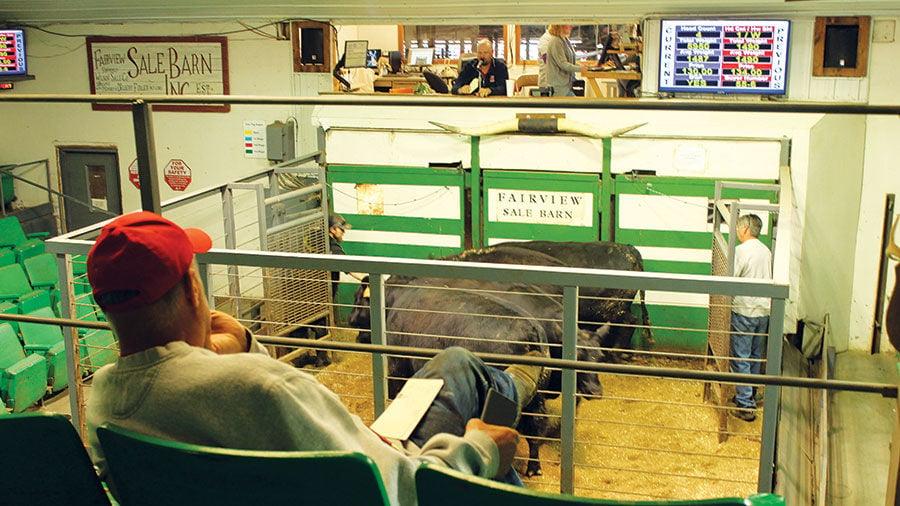 Fairview Sale Barn