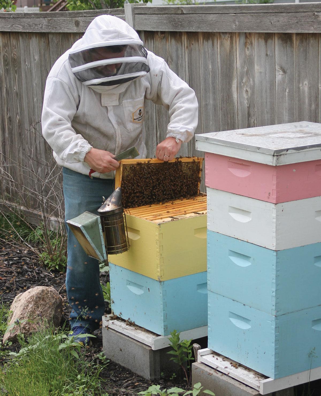 Michael Peverill keeps beehives