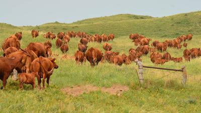 Grazing Nebraska Sandhills