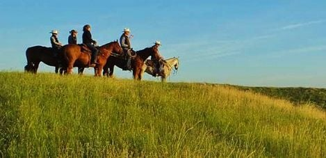 Cattle producers on horses in field