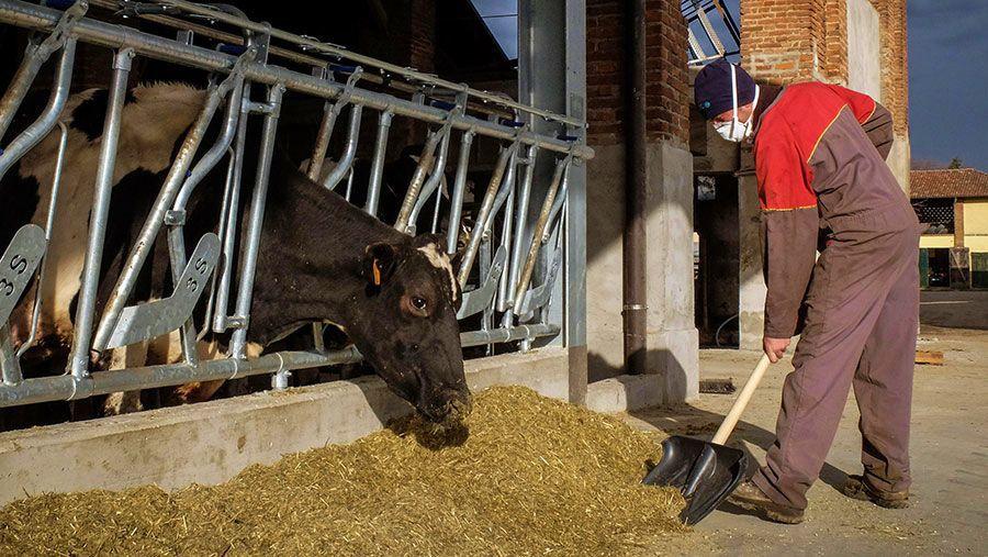Dairy worker wears mask