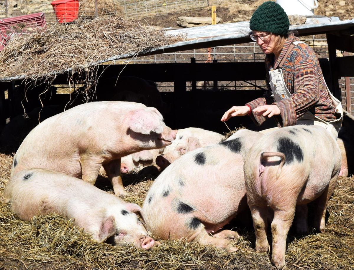 April Prusia with spot gilts