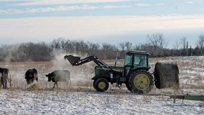 Winter feeding hay