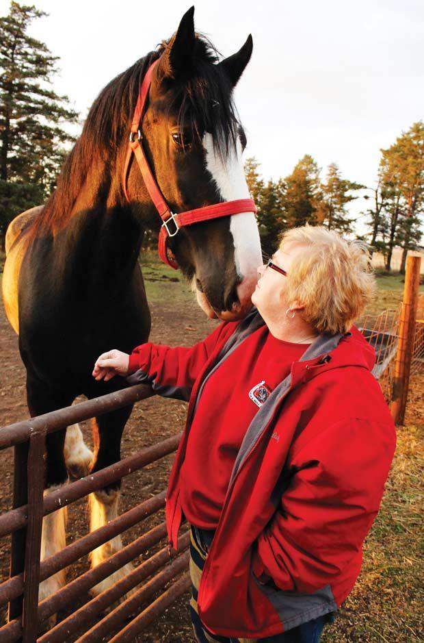 Becky Fevold - Draft Horses
