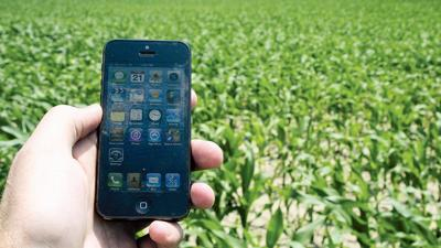 hand holding iphone in corn