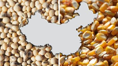 Corn and Soybeans with China map