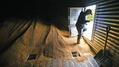 HARVEST Lance Lillibridge walks out of a grain bin
