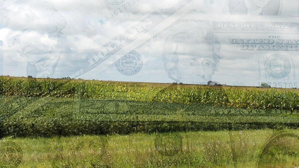 Corn and soybean field with money transparency