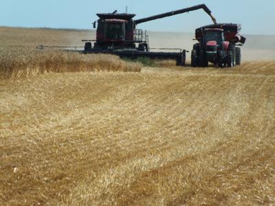 small grain harvest