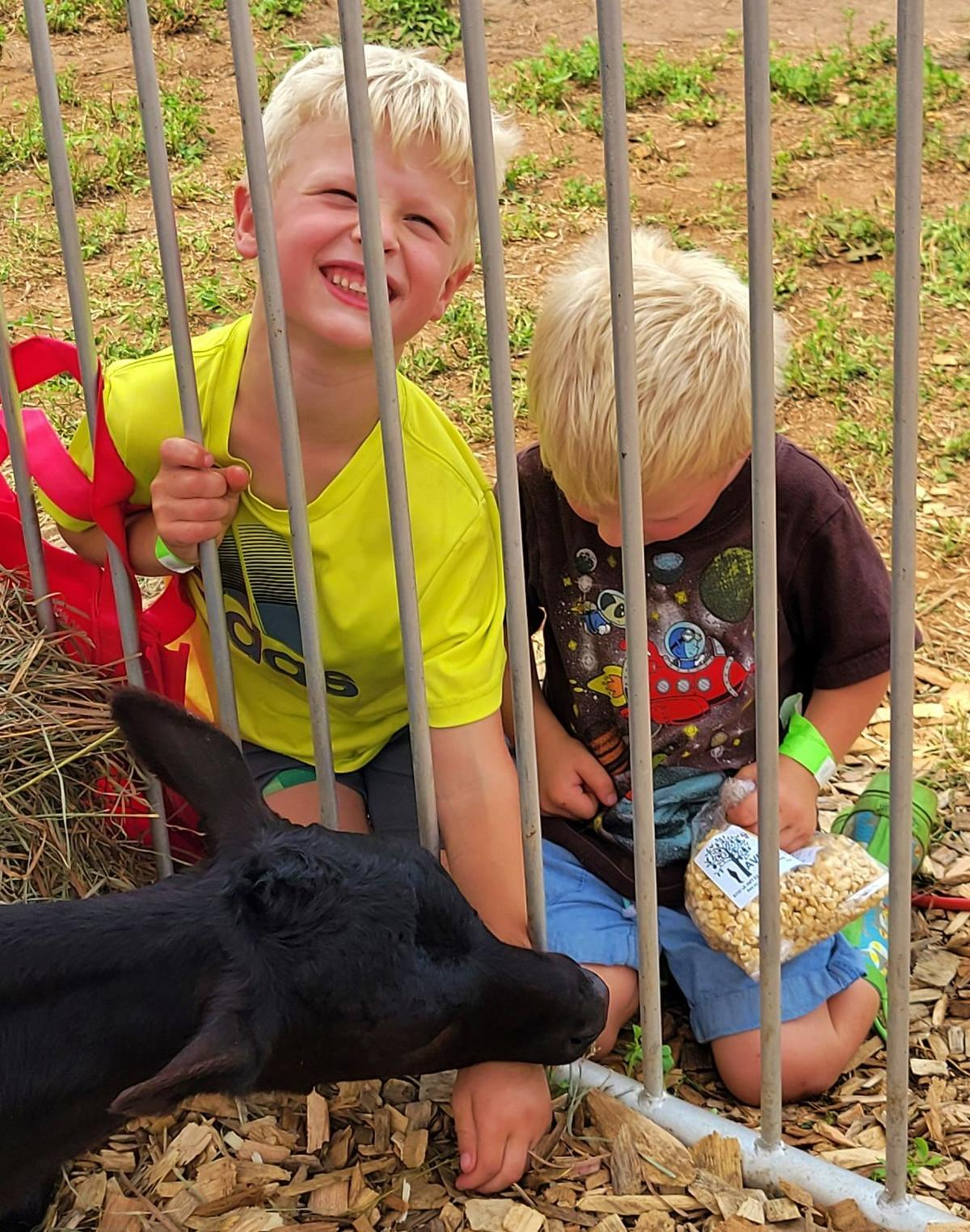 Boys playing with calf