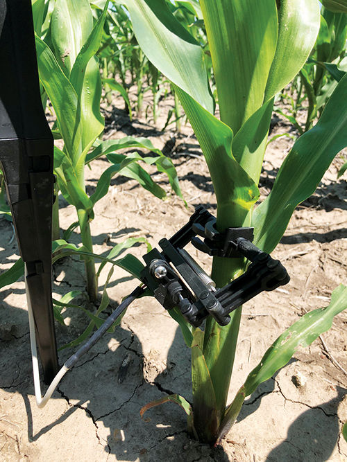 "Corn stalk sensor connects farmers  to ""pulse"" of the field"