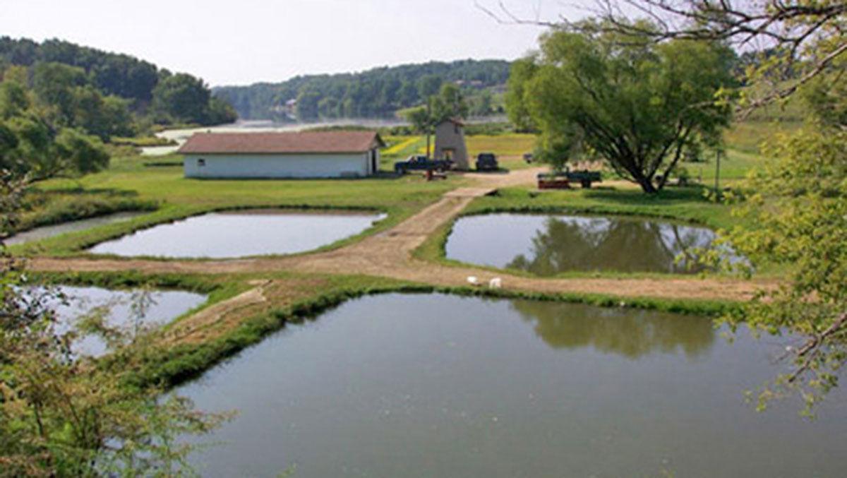 Northstar Hatchery in Montour, Iowa