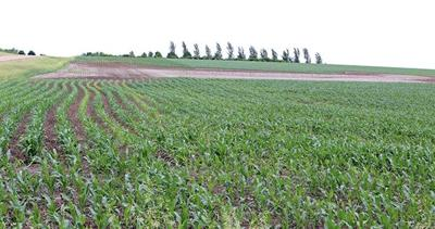 Weed control a top priority on prevent plant acres