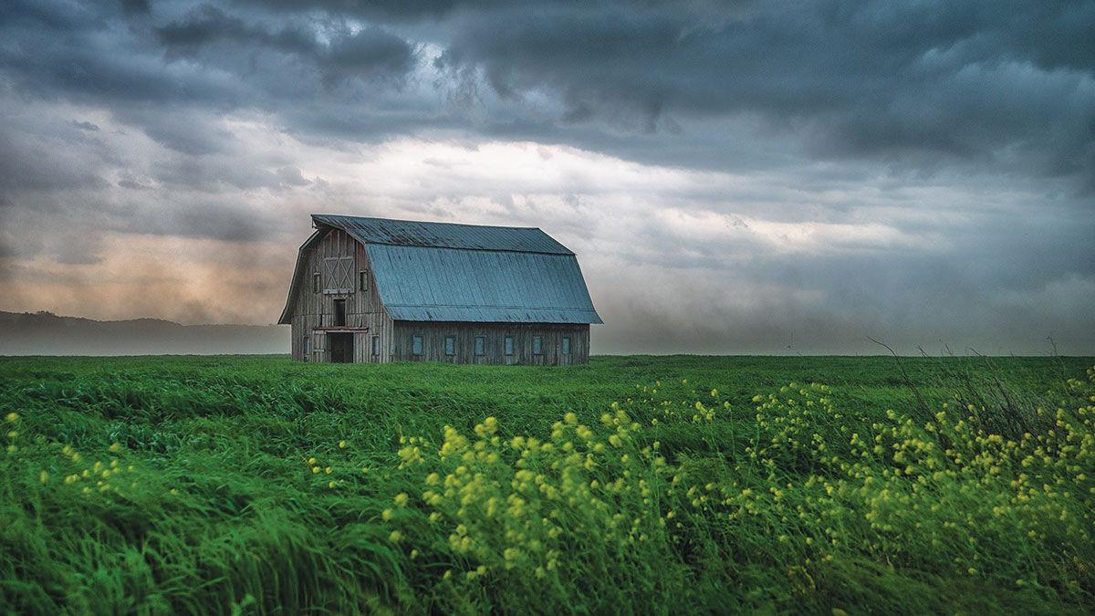 """Best in Show: """"Weathering the Storm"""" by Chris Peper."""