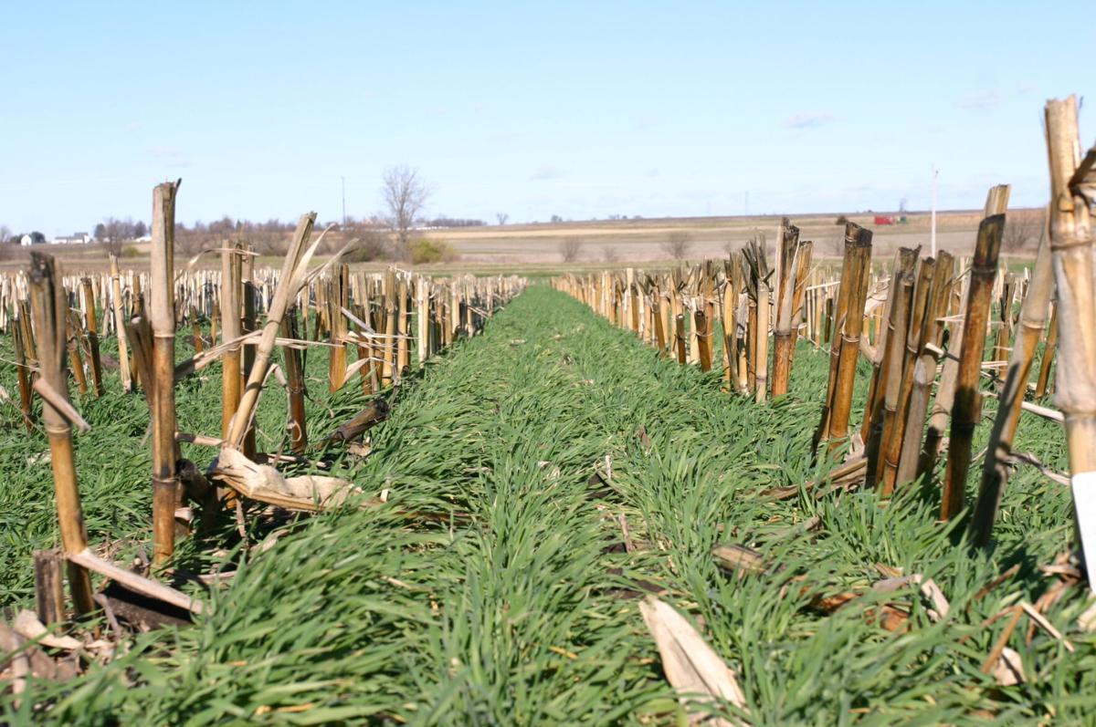 Cover crops (1).JPG