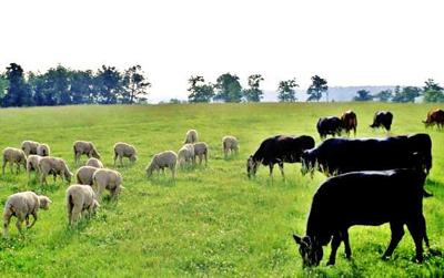 joint grazing