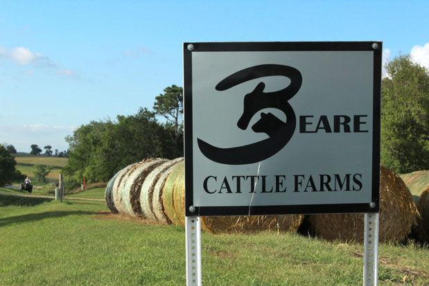 Beare-show-cattle-(29).jpg