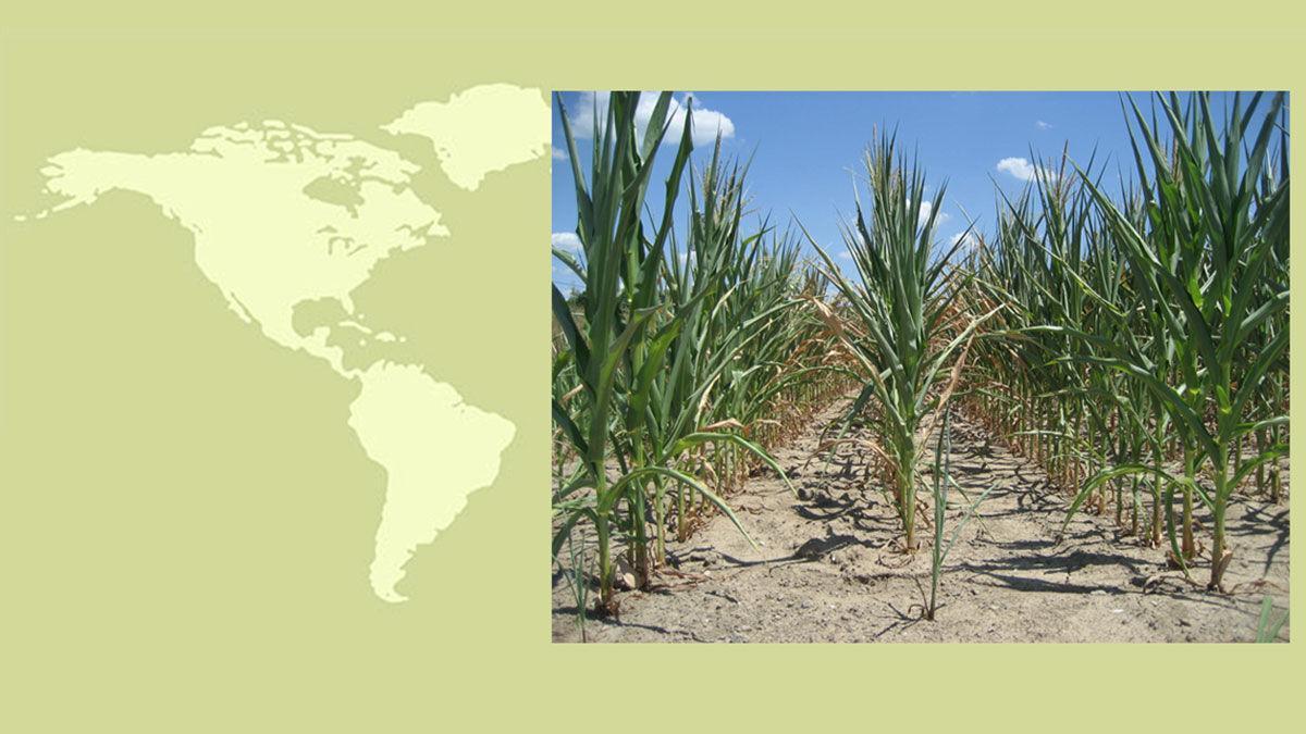World map dry corn