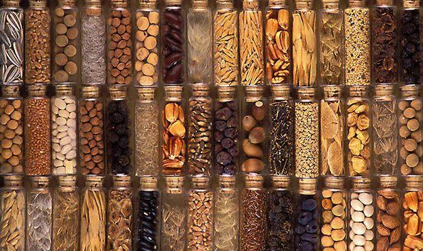 Seed-preservation display