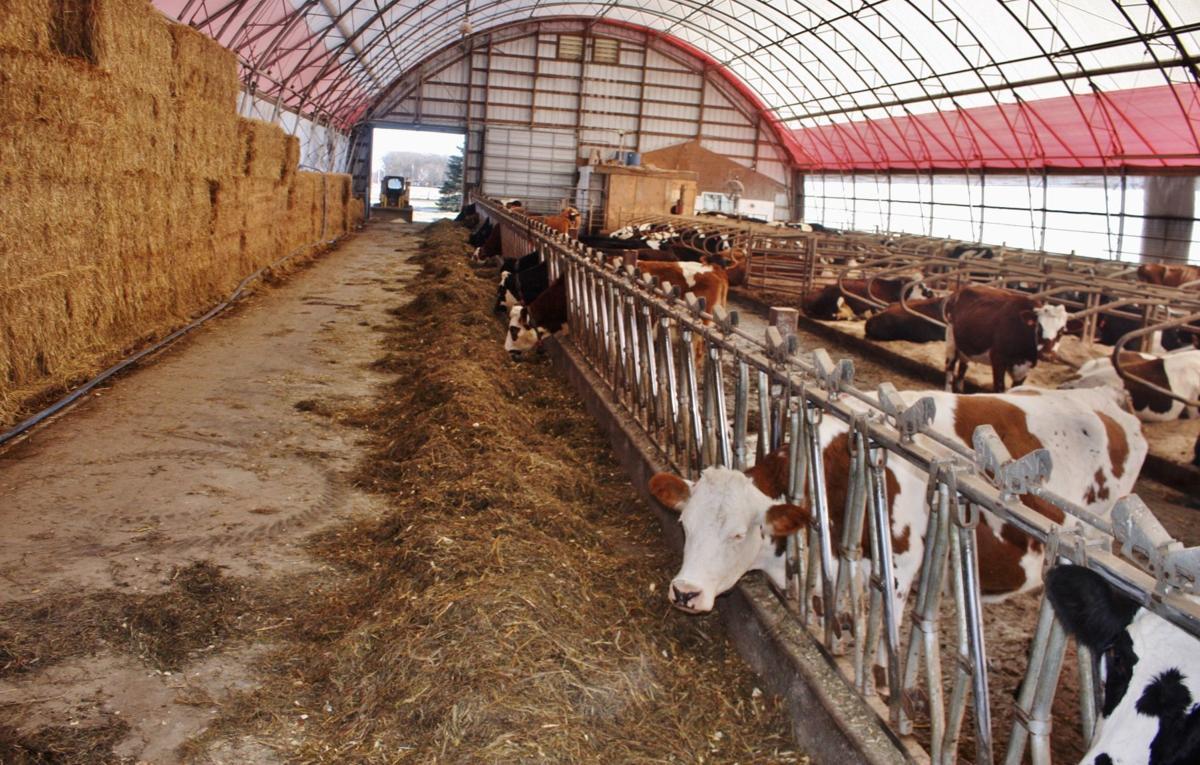Dairy farm is a hybrid