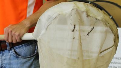 State Pest Survey net photo