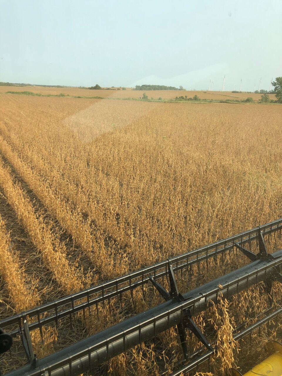 Bob Worth Soybean Harvest 2020