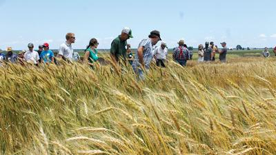 organic grains field day