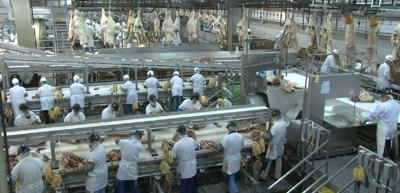 Beef processing plant workers