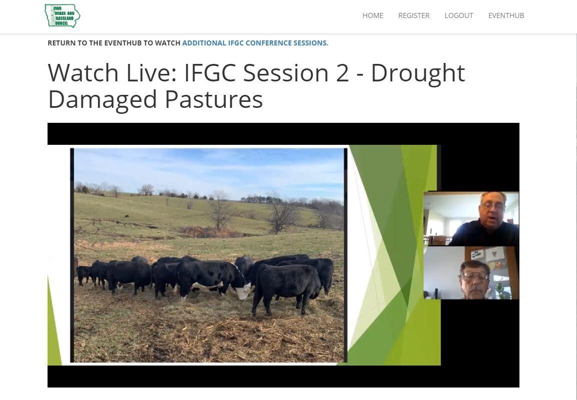 Grazing after drought 1.JPG