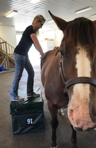 Chiropractic horse