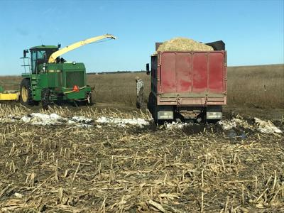 Silage snow