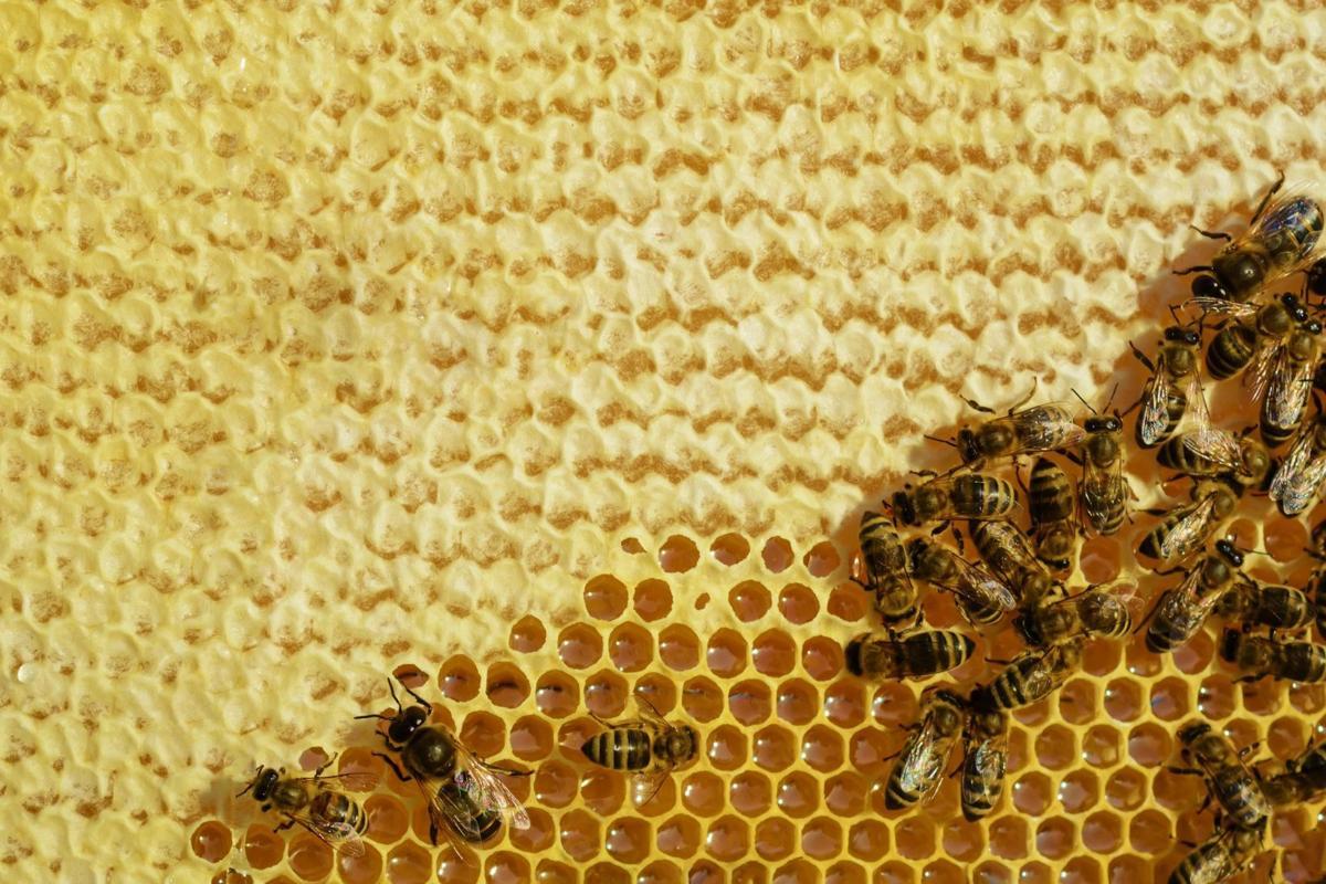 Bees create honeycomb