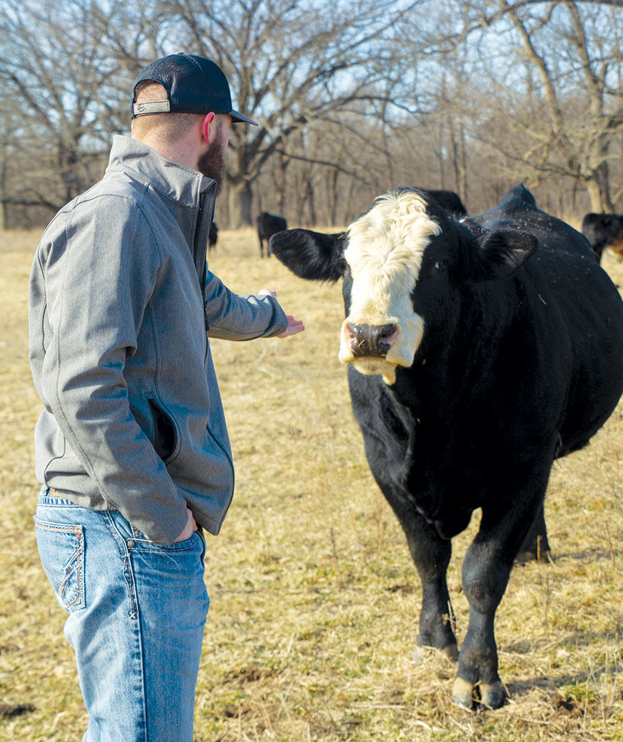 Cooper Black checks on a baldy bull