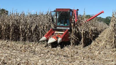 Missouri researcher harvests a corn test plot