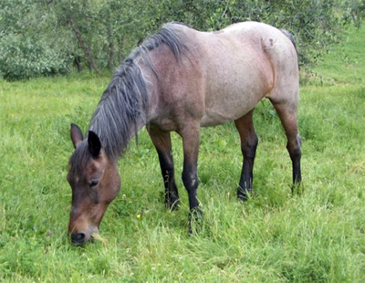 old horse elderly age