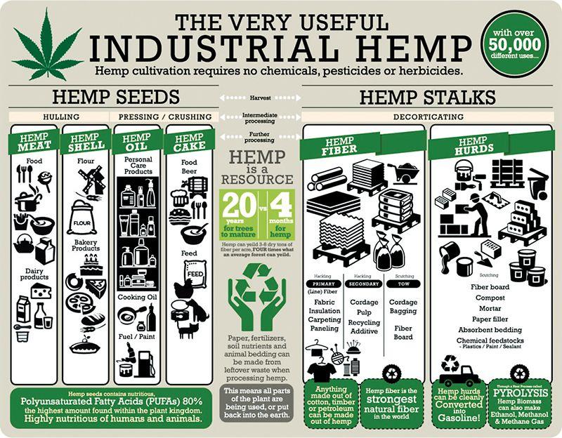 Industrial hemp uses infographic