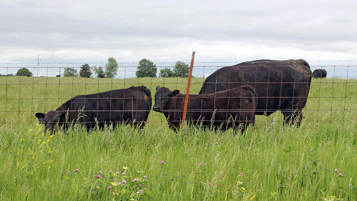 Livestock policy